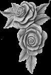 Roses - #025